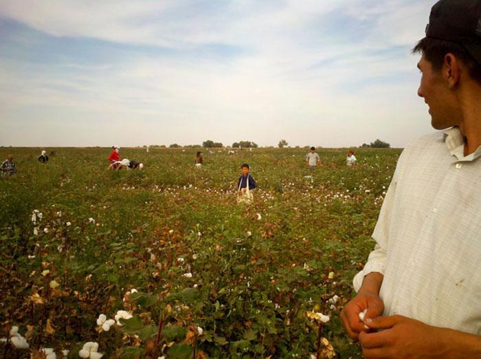 Uzbekistán: Trabajo forzoso vinculado al préstamo corporativo del Banco Mundial