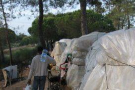 700 migrantes malviven entre chabolas para trabajar en el campo