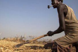 Cuando los trabajadores agrícolas pasan a tener hambre